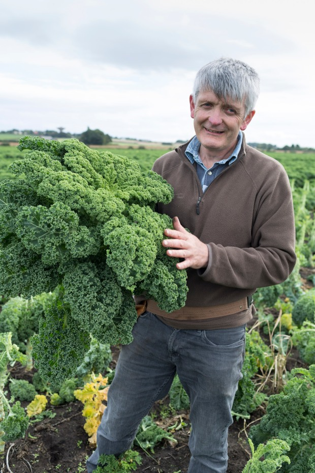 fruit-and-veg-grower-profile-september-2016-molyneaux-curly-kale-portrait