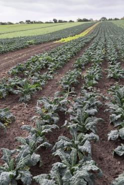 fruit-and-veg-grower-profile-september-2016-molyneaux-field