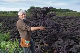 fruit-and-veg-grower-profile-september-2016-molyneaux-holding-purple-kale
