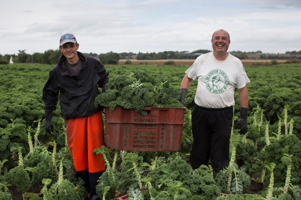 fruit-and-veg-grower-profile-september-2016-molyneaux-pickers-in-field